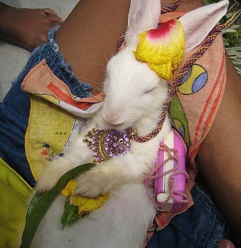 Rabbit9922w